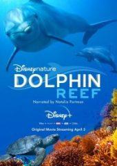 Dolphin Reef izle 2020